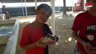 CHALLENGE PEGANG+GENDONG ULAR SUPER  JUMBOOO! - Bali Part (4)