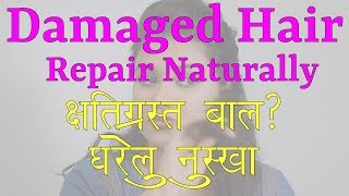 How to Repair Damaged Hair at Home (Hindi)