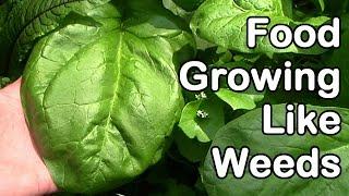 Food Growing Like Weeds