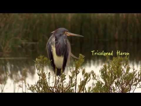 2015-01-20-Viera Wetlands
