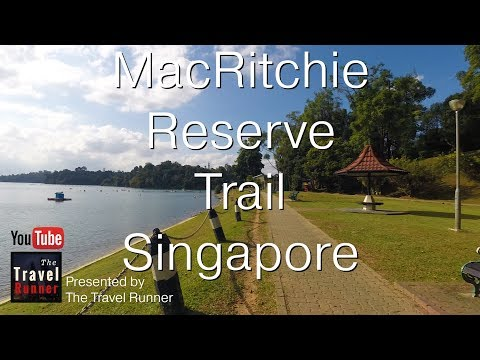 Singapore MacRitchie Nature Preserve Trails
