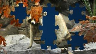 Чудо Пазлы Игра для Детей Мультик про Животных