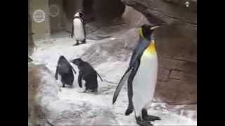 Butterfly visits penguins