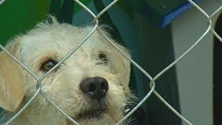 Для собак, найденных в метро Мехико, открыли приют (новости)
