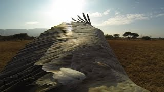 GoPro: The Cape Griffons