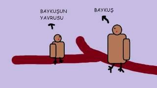 Baykuş ile Serçe Hikayesi