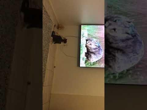 Cat amazed at Australia documentary