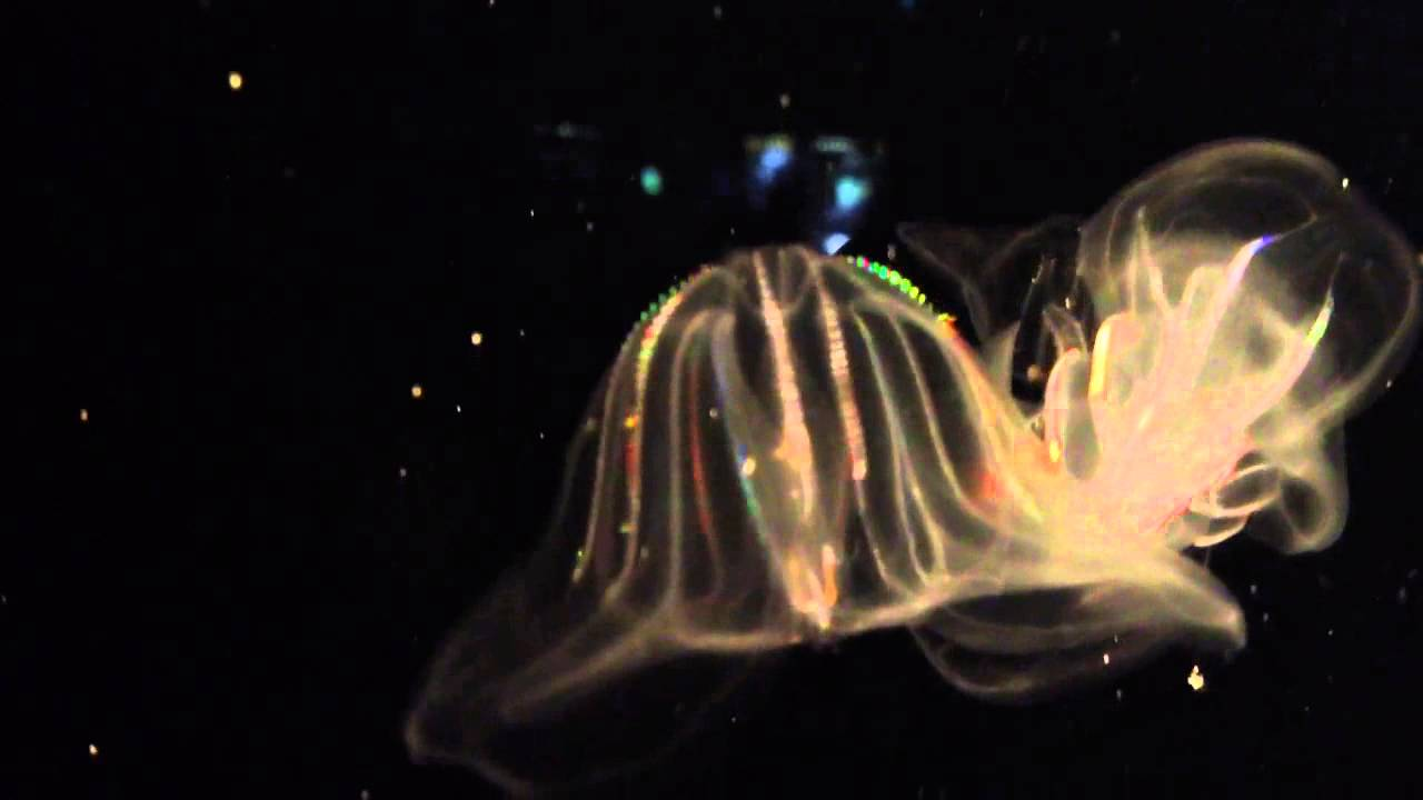 jelly fish with lights - youtube, Reel Combo