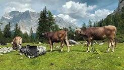 Lermoos 2019 - Zugspitze Area, Tirol, Austria