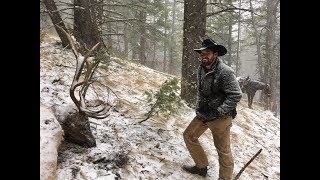 Elk KILLED by another elk!! & Nathan's Bull- Limitless 34