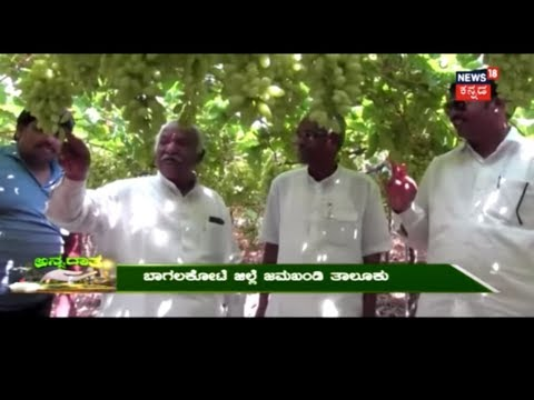 Annadata | Bagalkot's Grape Farming Success Story  | April 12, 2018