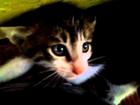 cat walking wheel