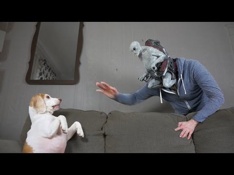 Dog vs Alien Mind-Controlled Owner Prank: Funny Dog Maymo