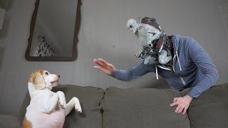 Dog vs Alien Mind-Controlled Owner Prank: Funny Dog Maymo