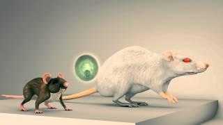 InfoPlus - Chemia 1 - Inżynieria genetyczna - Zwierzeta transgeniczne