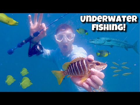 Underwater Fishing For Tropical Fish!