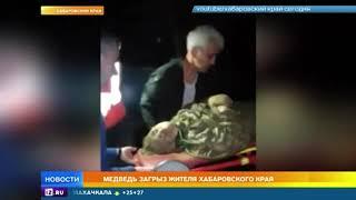 Хозяева тайги: в России участились нападения медведей на людей