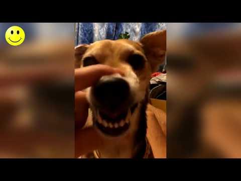 Smeh Do Suza - Smešni Video Snimci - Smešno Do Bola 2018 #10