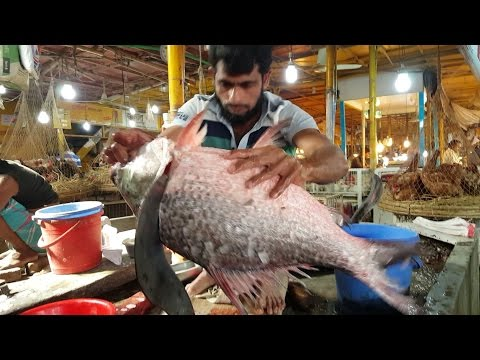 Huge Fish Cut into Chunk In MaliBagh Fish Market Dhaka Bangl