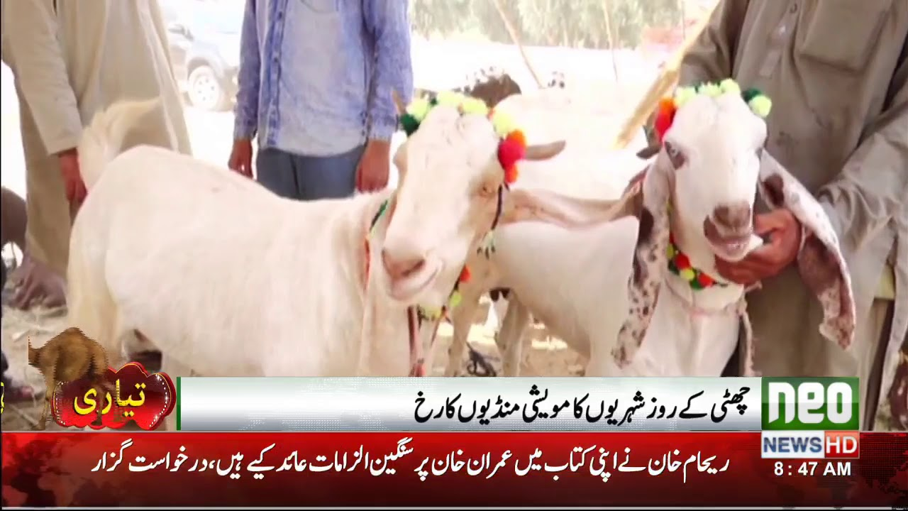 Animals For Eid Pakistan | Neo News | 06 August,2018
