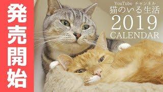 猫ズの2019年カレンダーがついに本日発売!可愛い写真がたくさんですよ