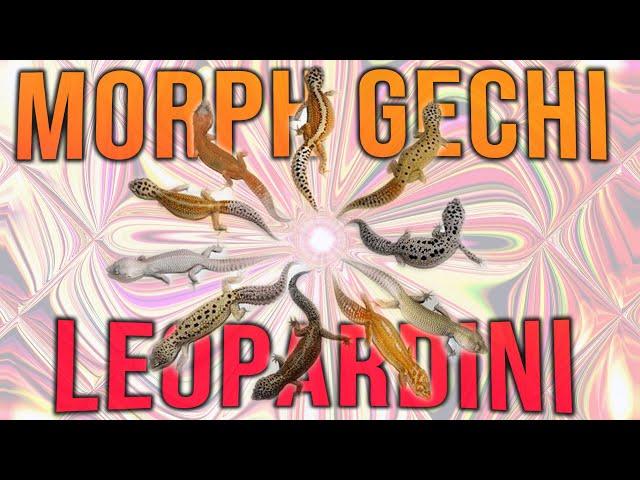 GENETICA (pt.2) - Come riconoscere MORPH dei GECHI LEOPARDINI