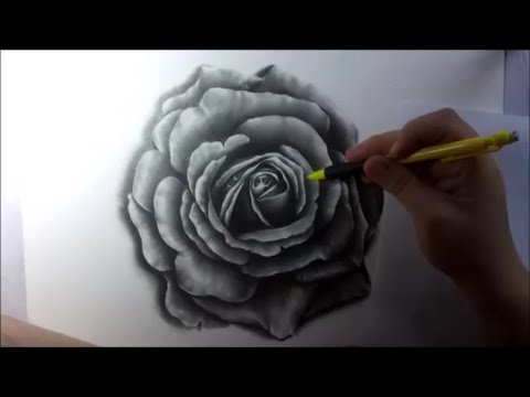 How To Draw Realistic Rose With Pencil