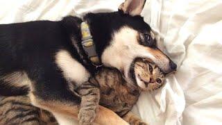 ПРИКОЛЫ С ЖИВОТНЫМИ Смешные Животные Собаки Смешные Коты Приколы с котами Забавные Животные 137