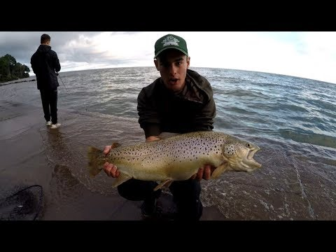 Early September Trout Fishing - Monster Brown Trout Caught Casting Spoons!