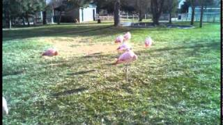 a small-sized zoo in Garden City, Kansas, USA (pop. approx. 28000) ...