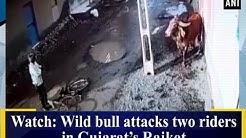 Watch: Wild bull attacks two riders in Gujarat's Rajkot