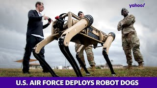 Robot dogs reporting for duty for U.S. Air Force