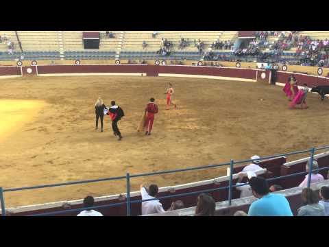 PETA Supporter Rushes to Help Dying Bull During Bullfight