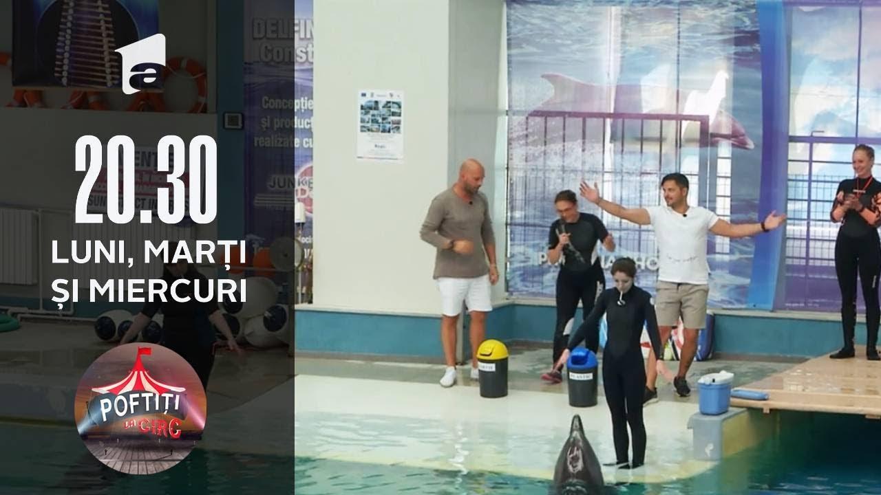 Poftiți la Circ | Spectacol oferit de delfini pentru vedetele lui Nea Mărin