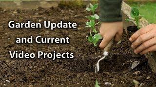Growing Update + Weekly Videos are Coming Back!