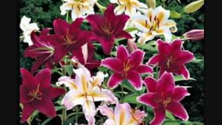 Piya Bavari (The Perfumed Garden) Abhijit Pohankar