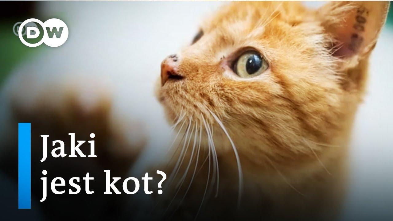 2a9739b5b3f453 Jaki jest kot? 7 typowych zachowań kota - YouTube