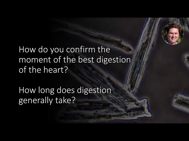 When digesting the heart for cardiomyocyte isolation, how long does it usually take?