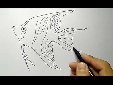 Download 76 Gambar Ikan Hias Pensil Terbaru