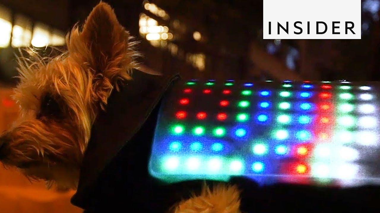 Dog Vest That Lights Up