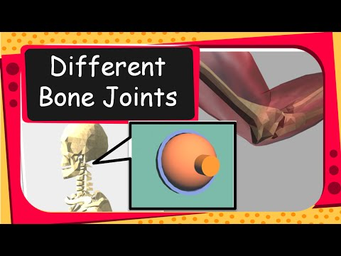 science - human bones and bone joints animation - english - youtube, Skeleton