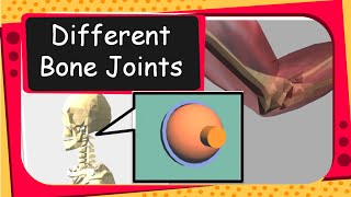 Science - Human Bones and Bone Joints Animation - English