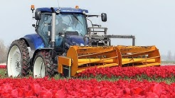 The Story of the Tulips | Planting to Harvest | One year at Maliepaard Bloembollen