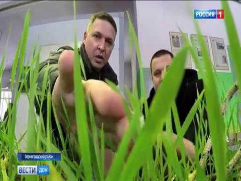 Как обилие снега скажется на будущем урожае Ростовской области?