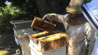 Farmer Ben Eichorn Beekeeping, July 2014