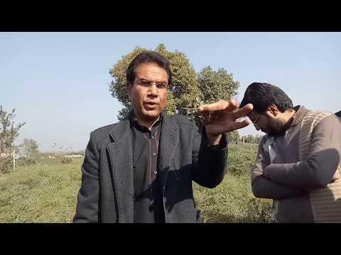 Moringa Champion Prof. Dr. Shazad Maqsoor Ahmad Basra is talking about identification of Moringa