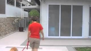 Kiyo's Ph.d. Exam - Canine Life And Social Skills (c.l.a.s.s.)