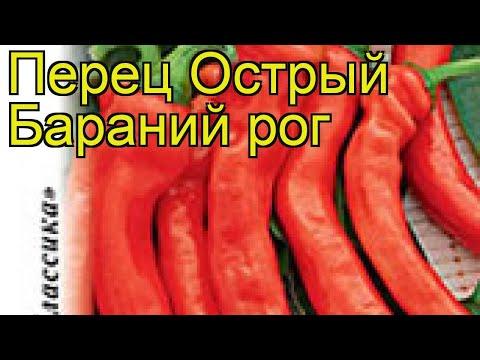Перец острый Бараний рог. Краткий обзор, описание характеристик, где купить семена cápsicum ánnuum