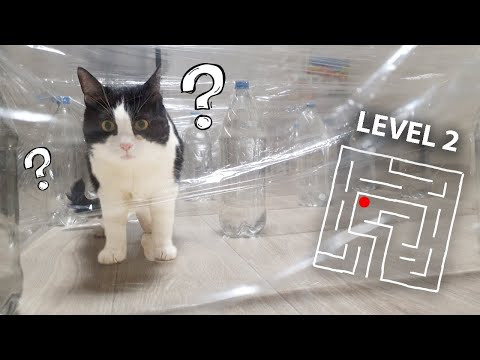 Invisible Maze or