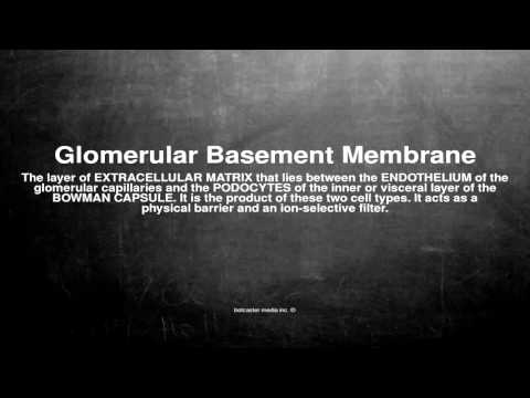 medical vocabulary what does glomerular basement membrane mean